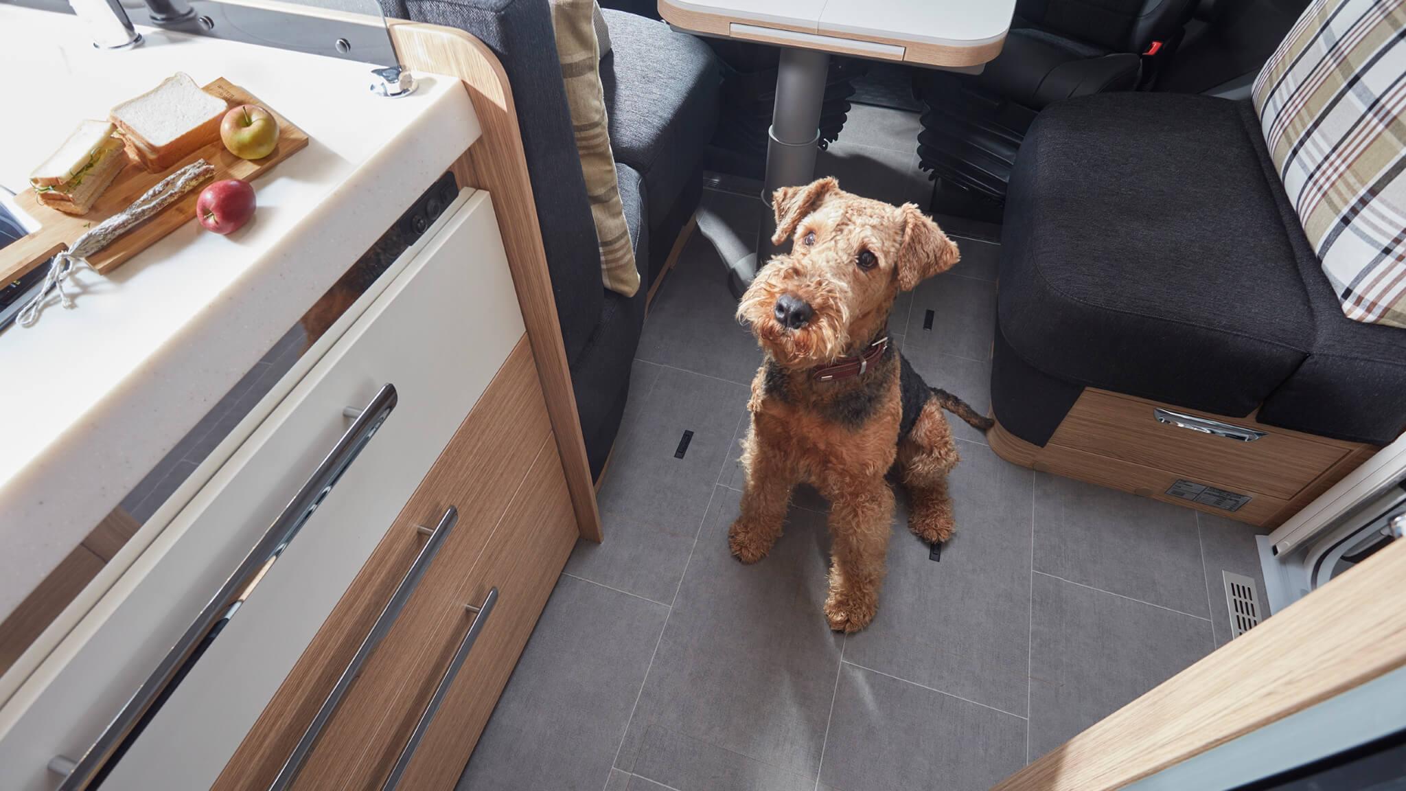 NIESMANN+BISCHOFF - Arto - Grundriss Face-to-Face - Hund im Innenraum